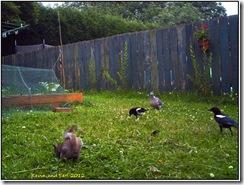Garden cam  08-07-2012 07-07-33