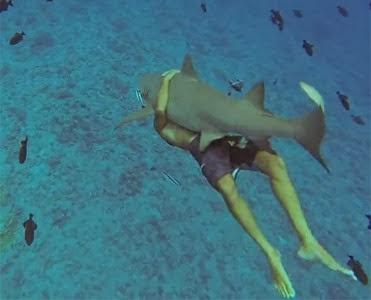 Americano nada abraçado com tubarão de 2,4 metros