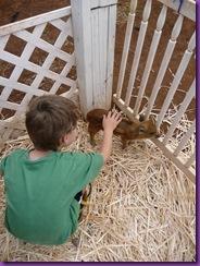 horse rescue 010