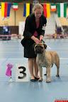 20130511-BMCN-Bullmastiff-Championship-Clubmatch-2059.jpg
