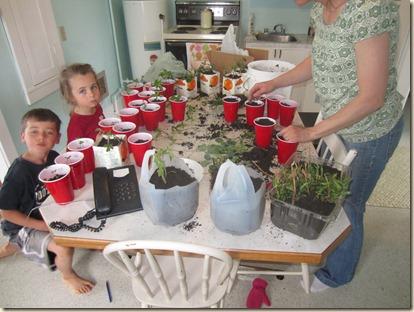 potting plants 054