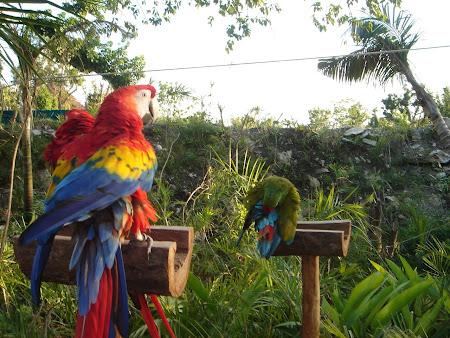 Xcaret parrot