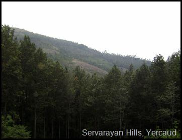 Servarayan Hills, Yercaud