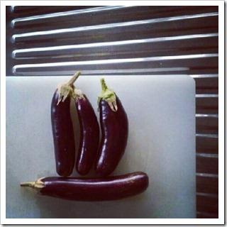 aubergine harvest