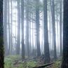 Edanticonf_Forest Echo