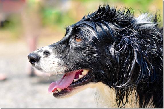 dog bath-4524