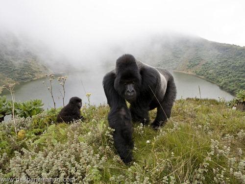 animais national geographic desbaratinando  (47)