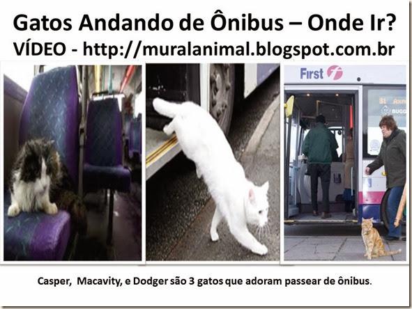 Gatos Andando de Ônibus – Onde Ir