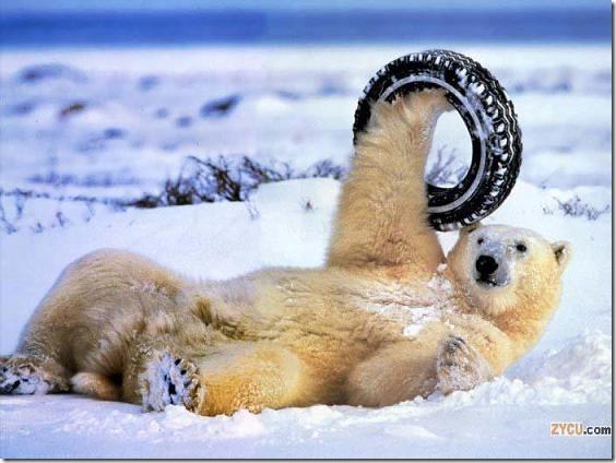 fotos animales divertidas patatitasylimones (31)