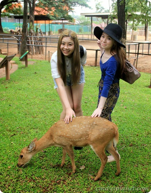 Chok Chai Farm Petting Zoo (7)