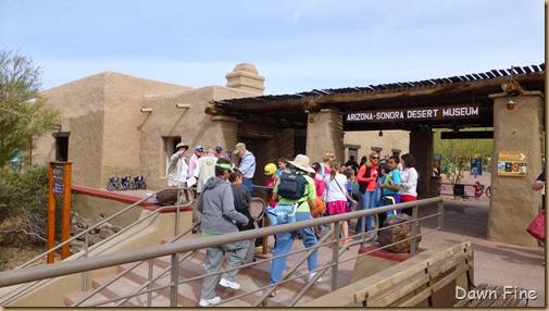 Desert museum_015