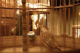 Shanghai - Pets market - Comme un oiseau en cage