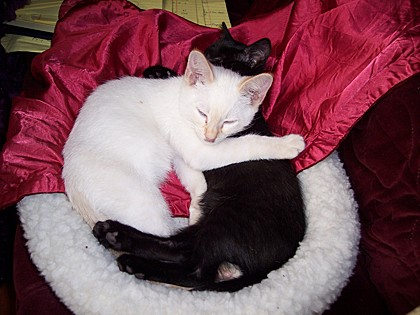 Don't these cuties look like the Yin-Yang symbol?