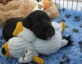 puppy3 003