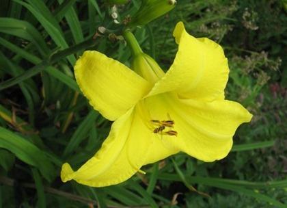 flower01822