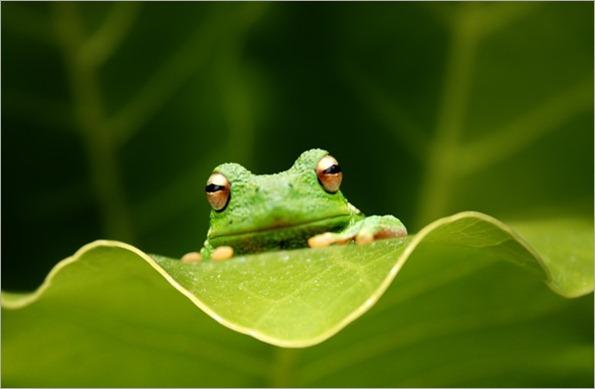 frog1920