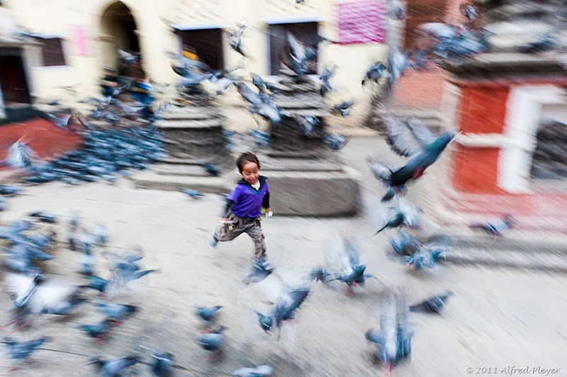 Pigeon Run in the Piazza Alfred Pleyer