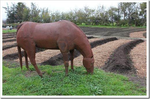 120212_SierraAzul_Michael-Seymour---GMO-Heifer