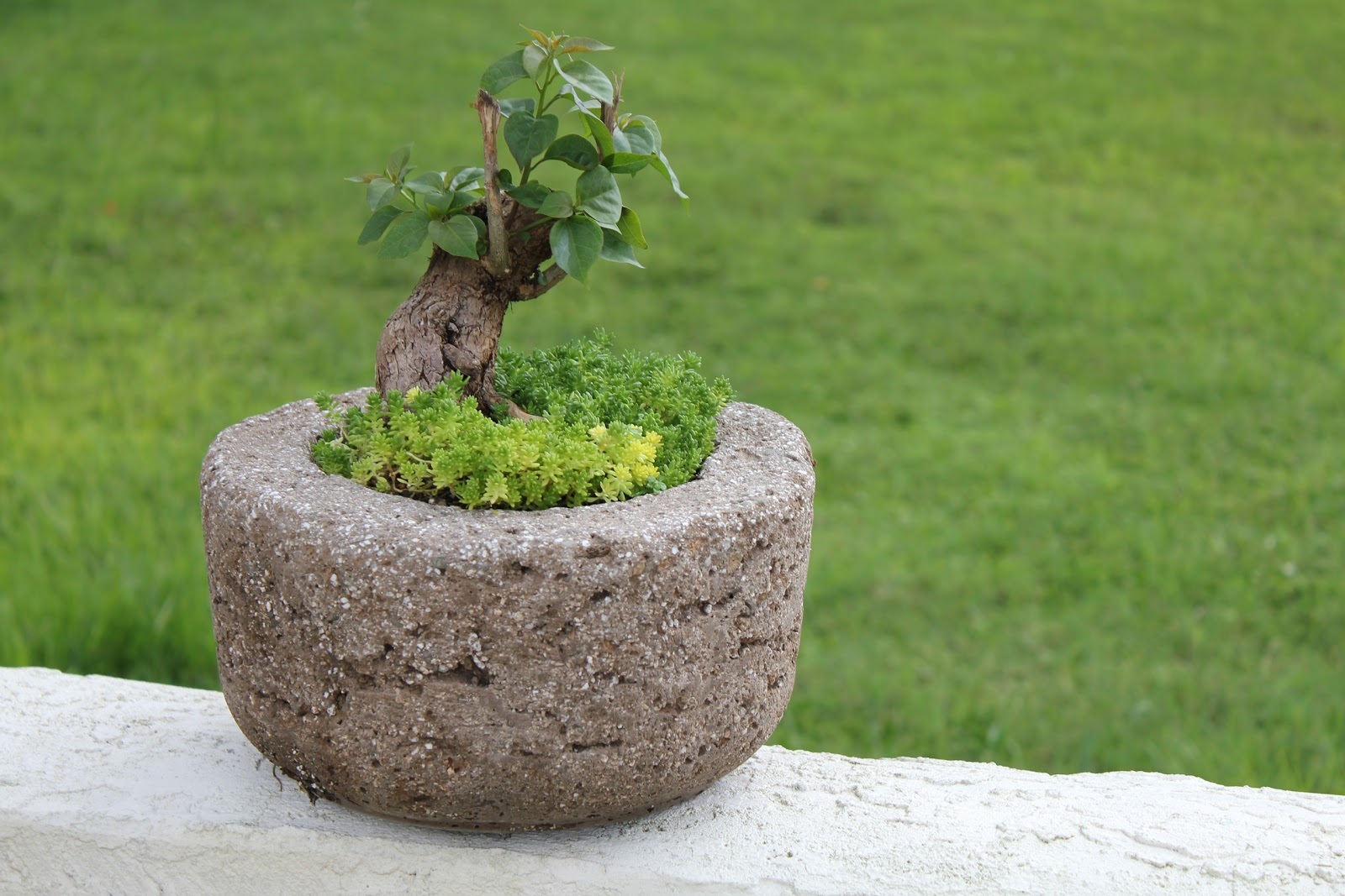 Bougainvilleas on hypertufa pots | The hypertufa succulent