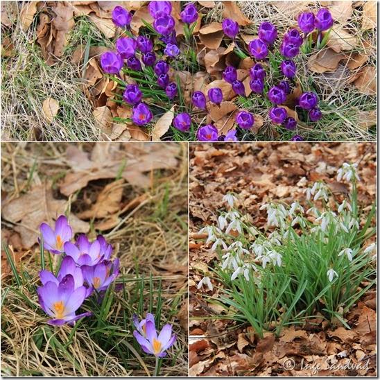 Blomster i skoven