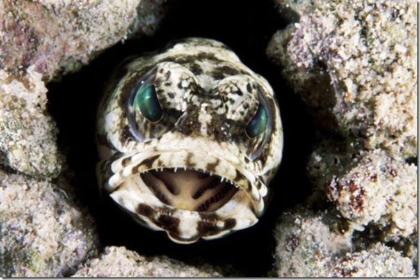 Fotos subaquáticas de David Doubilet (9)