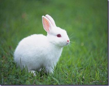 [wallcoo_com]_Lovely_rabbit_Picture_da033008s