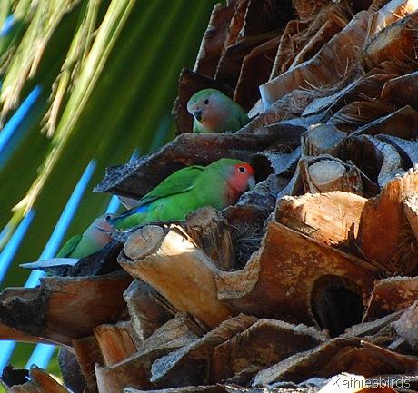 13. Life birds-kab
