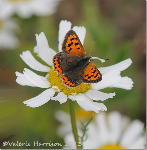 4-small-copper