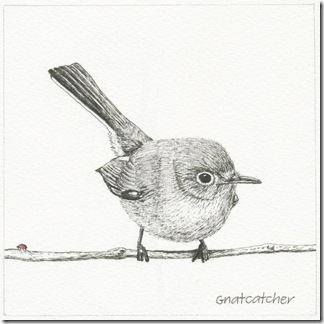 88 gnatcatcher
