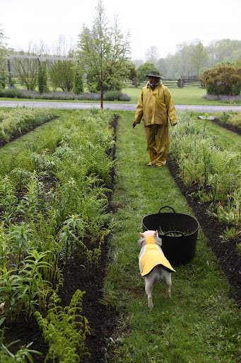 Hi Pete!  Do you fellows need any help weeding the lily beds?