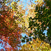 fall tree views in my yard 043.JPG