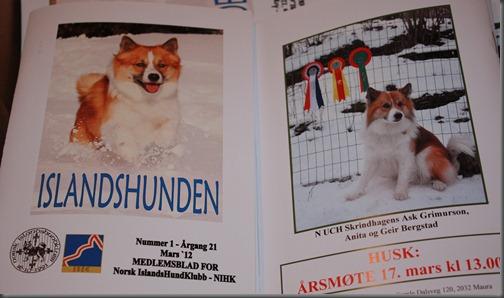 islandshunden-1-12 004