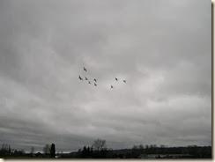 flight of swans