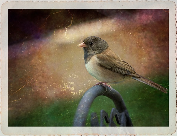 Junco textured