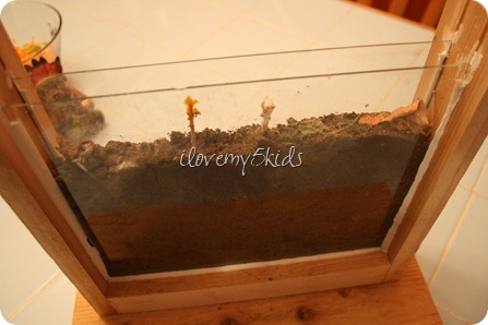 How to feed Ants in Ant Farm