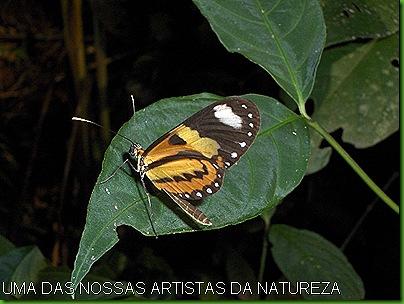 Natureza E BORBOLETAS