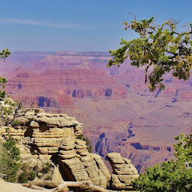 Grand Canyon Arizona by Esther Lane - Landscapes Mountains & Hills ( hills, national park, mountains, park, grand ganyon, trees,  )