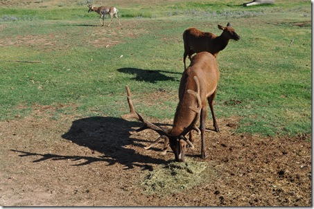 07-11-11 zoo 17