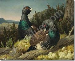 wright-ferdinand-von-1822-1906-capercaillies-2376429