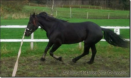 2011-ardvinna-4okt_01