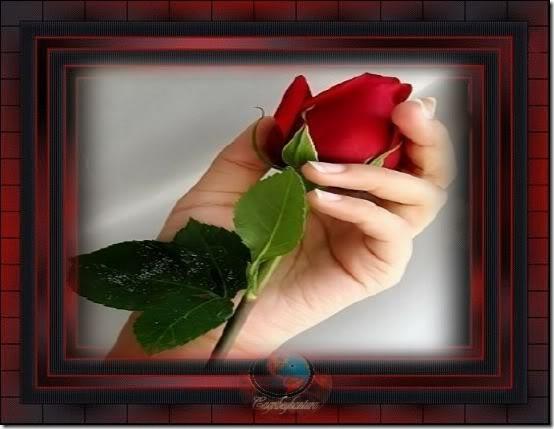 flor día del amor (28)