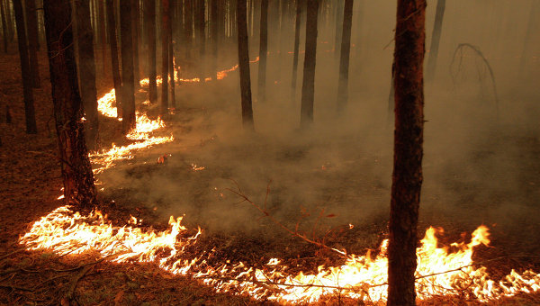 Fire burns through a forest in Siberia, 7 August 2012. RIA Novosti