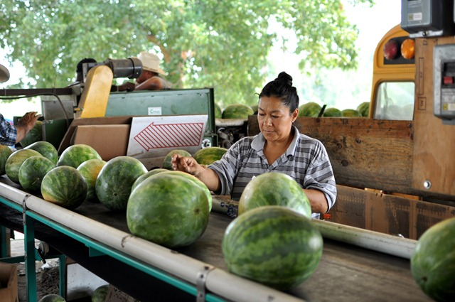[watermelons%252011%25200705%2520%2528104%2529%255B4%255D.jpg]