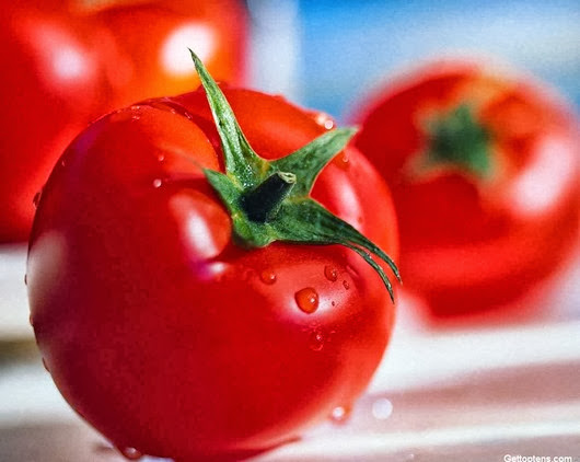 most-poisonous-foods-we-love-to-eat-tomatoes