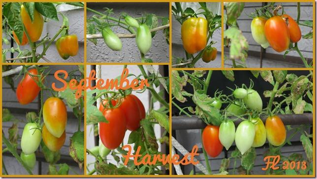 TomatoesIP