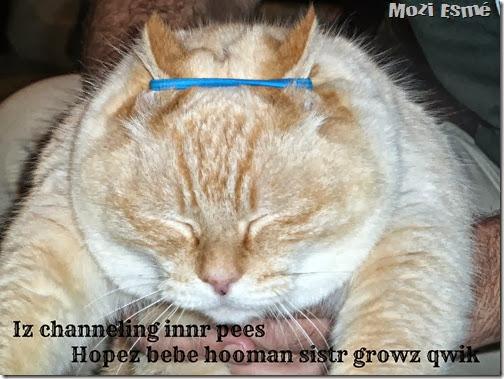 Inner Pees Cat