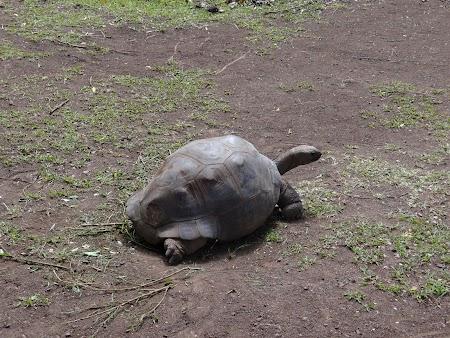 Obiective turistice Mauritius: Broasca testoasa