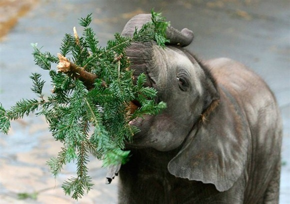 Cute-Christmas-Creatures-08