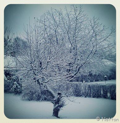äppelträd i vinterskrud