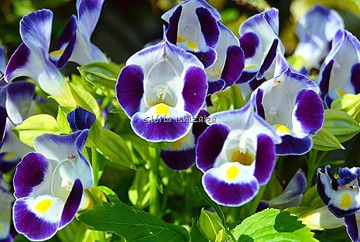 Azul - Glória Ishizaka 16